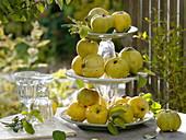 Apfelquitten auf selbstgebauter Etagere aus Gläsern und