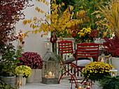 Gelb - roter Herbstbalkon mit Kurilenkirsche , Zierkirsche