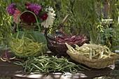 Verschiedene Sorten frisch geerntete Bohnen