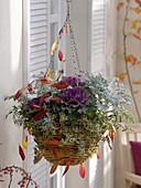 Korb - Ampel bepflanzt mit Brassica (Zierkohl), Abelia grandiflora 'Confetti'