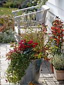 Großer Metall - Kübel bepflanzt mit Cyclamen (Alpenveilchen), Hypericum