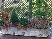 Winterfest bepflanzter Steintrog mit Buxus (Buchs) - Kegel und Kugel