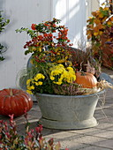 Alte Zink - Sitzbadewanne bepflanzt