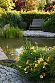 Teich mit Holzsteg und Bank : Hemerocallis(Taglilien), Typha (Rohrkolben), Buxus (Buchs - Kugel), Holzbank am Kiesufer