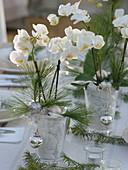 Weihnachtliche Orchideen - Tischdeko in weiß