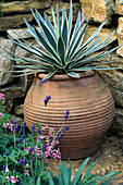 Agave IN TERRACOTTA Pot IN THE CARTIER / HARPERS & Queen Garden, CHELSEA 95. Designer: Mark Walker