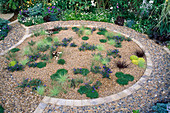 GRASSES & GROUND Cover IN CIRCULAR STONE-EDGED GRAVEL BED THE EVENING STANDARD EROS GARDEN.CHELSEA'95.DES:JULIE TOLL