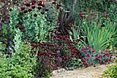 PAPAVER SOMNIFERUM,Dianthus 'DAD'S FAVOURITE' & BARBATUS NIGRESCENS,PHORMIUM TENAX BURGUNDY.HADSPEN Garden,SOMERSET.