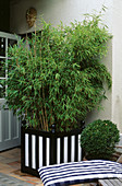 Versailles TUB STRIPED Black AND White with BAMBOO. Designer: Anthony Noel