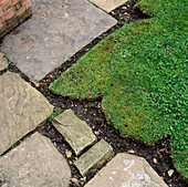 Detail of York STONE PATH AND DECORATIVE SHAPE of EDGE of LAWN. Designer: Anthony Noel