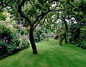 THE Garden AND WELL-Kept LAWN From THE REAR of THE HOUSE with Old BRAMLEY Apple TREES. Designer: MALLEY Terry