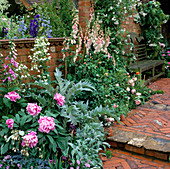 an English Cottage Garden: HERRINGBONE BRICK STEPS LEAD TO SEAT SURROUNDED by CLIMBNG White ROSES AND FOXGLOVES IN THE COUNTRY Living GARDEN. CHELSEA