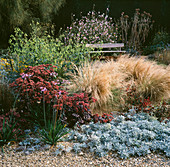 Artemisia STELLERIANA, Tulbagia VIOLACEA, LINUM NARBONENSE, STIPA TENUISSIMA PLANTED IN GRAVEL. BETH CHATTO'S GARDEN.