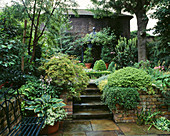 STEPS LEAD TO RAISED AREA with SECLUDED CLIMBER CLAD PAGODA HOSTA AND IVY IN Pot Beside BENCH. Designer: J.BILLINGTON