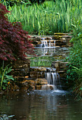 STREAM with Double WATERFALL OVER ROCKS OVERHUNG by Acer LITTLE COOPERS, Hampshire