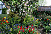 Apfelbaum im Frühlingsbeet