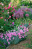 Pink / Purple BORDER: Dianthus 'ROSE DU Mai', Rosa 'MME LAURIOL De BARNY' AND ALLIUM CHRISTOPHII IN THE Garden at THE ANCHORAGE, KENT.