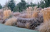 PHORMIUM,MISCANTHUS SP,Artemisia 'POWIS Castle',PENNISETUM ALOPECUROIDES,CORTADERIA 'PUMILA' THE Old VICARAGE, Norfolk