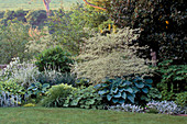HOSTA SIEBOLDIANA ELEGANS,ALCHEMILLA MOLLIS,STACHYS,THRIFT, CORNUS ALTERNIFOLIA 'SARGENTEA'. DESIGN / Elisabeth WOODHOUSE. THE White HOUSE