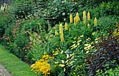 Delphinium 'SUNGLEAM',Lupinus 'CHANDELIER', ARGYRANTHEMUM 'Jamaica PRIMROSE'. WOLLERTON Old HALL, SHROPSHIRE