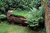 Chamomila SEAT Made From THE FELLED Trunk of A THUJA, with Wild FERNS GROWING ALONGSIDE. LITTLE Court, HANTS.