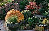STONE TROUGH AND POND with Acer PALMATUM DISSECTUM AND Hydrangea LAKEMOUNT, GLANMIRE, EIRE