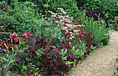 ANTHRISCUS RAVENSWING,AQUILEGIA VULGARIS Double Red AND ATRIPLEX HORTENSIS RUBRA. HADSPEN Garden,Somerset