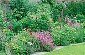 GERANIUM PSILOSTEMON, ROSE 'TUSCANY SUPERB', Digitalis PURPUREA, PENSTEMON 'HUSKERS Red', VERONICA 'Pink DAMASK. HADSPEN Garden, Somerset