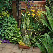 Water Feature: Old PUMP SURROUNDED by ZANTEDESCHIA, Iris, Primula BULLEYANA AND FERNS (Yellow / Blue THEME)