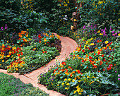WOODEN PATH LEADS THROUGH Mixed BEDS of HERBS, NASTURTIUMS, CALENDULA, LETTUCES AND Beans IN 'THE EDIBLE Garden' at CHELSEA 1994. Designer: JULIE TOLL.