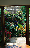 VIEW THROUGH THE BACK DOOR / French WINDOWS INTO COURTYARD Garden WITHWOODEN DECKING & TIMBER Pergola SURROUNDED by FUCHSIAS, CROCOSMIA, JAPANESE ANEMONES.