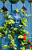 HEAD by FIONA BARRATT PAINTED Blue TO MATCH THE FENCE, SURROUNDED by Golden HOP AND NASTURTIUMS. THE NICHOLS Garden, READING