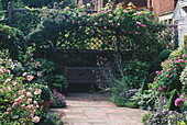 WOODEN BENCH UNDER SHADY ARBOUR with CLIMBING Rosa 'CONSTANCE SPRY'