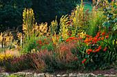 PRAIRIE PLANTING: Origanum 'HERRENHAUSEN', Salvia 'MAINACHT', COREOPSIS VERTICILLATA, Verbascum OLYMPICUM, STIPA GIGANTEA,CROCOSMIA MASONORUM. Lady Farm, Somerset