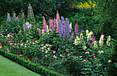 DELPHINIUMS 'Butterball' AND 'White RUFFLES' IN A BORDER at THE ABBEY HOUSE, Wiltshire