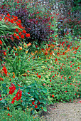 Red BORDER: PRUNUS CISTENA, CROCOSMIA LUCIFER, ANTIRRHINUM 'SCARLET GIANT', POTENTILLA 'GIBSONS SCARLET' AND HEMEROCALLIS 'Mrs HUGH JOHNSON'