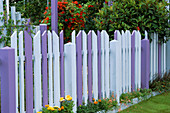 Blue AND Purple TIMBER FENCING with Mixed TROPAEOLUMS IN BACKGROUND. Gardening Which / MET. POLICE 'A SAFE HAVEN'. HAMPTON 1999.