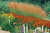PRAIRIE PLANTING at Lady Farm: LIATRIS Spicata 'Alba', HELENIUM 'MOERHEIM BEAUTY', RUDBECKIA FULGIDA 'Goldsturm', Achillea 'FANAL' AND CALAMAGROSTIS X ACUTIFLORA 'Karl FOERSTER'