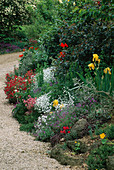 LAUNA SLATTER'S Garden, OXON: BORDER Beside DRIVE with TANECETUM, Yellow Iris, POPPIES, HELIANTHEMUM, AUBRIETA AND CERASTIUM TOMENTOSUM