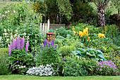 LAUNA SLATTER'S Garden, OXON: BORDE with Lupinus, Yellow Iris, HOSTA 'Blue Moon', Viola CORNUTA AND STACHYS