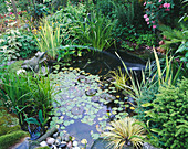 CAROLYN HUBBLE'S SHROPSHIRE GARDEN. Wildlife POND with MARBLE FROG, WATERLILIES, IRISES AND FERNS