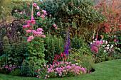 LAUNA SLATTER'S Garden: BODER with THALICTRUM AQUILEGIFOLIUM, ROSE 'GERTRUDE JEKYLL, PHUOPSIS STYLOSA, ALLIUM CHRISTOPHII AND FOXGLOVE