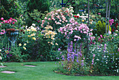 ROSES AND LAWN IN CAROLYN HUBBLE'S Garden, SHROPSHIRE
