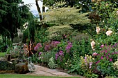 CAROLYN HUBBLE'S Garden, SHROPSHIRE: BORDER with ROSES, ALLIUMS AND CORNUS ALTERNIFOLIA ARGENTEA