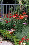 CURVING PATH with BRICK SETTS AND Pink GRAVEL Mulch SURROUNDED by Box BALLS, Red LILIES , ROSES, NICOTIANA AND LYCHNIS CORONARIA.DESIGNER ANDREW ANDERSON