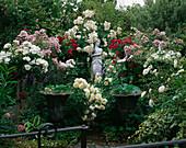 VALENTINE ROSE Garden IN CAROLYN HUBBLE'S Garden, SHROPSHIRE: STANDARD ROSES IN PAIRS - White FLOWER CARPET,MARJORIE FAIR, THE PILGRIM AND BALLERINA. Italian MARBLE Statue
