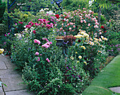 BORDER IN CAROLYN HUBBLE'S Garden, SHROPSHIRE: ROSES INCLUDING THE WEEPING STANDARD ROSE 'PAUL TRANSON'