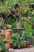 COLIN AND RUTH LORKING'S Garden, Suffolk: Green TABLE with Metal Container with ECHEVERIA. RHUBARB FORCING Pot, AEONIUM 'ZWARTKOP', POTS of HALF Hardy PERENNIALS.