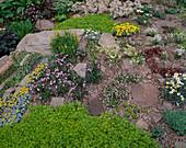 ROCKS, GRAVEL AND ALPINE PLANTS by THE ALPINE Garden SOCIETY, CHELSEA