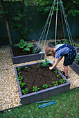 CONNIE PLANTING PARSLEY IN THE DECORATIVE CHILDRENS POTAGER